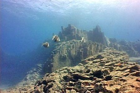Aqua marina dive centre in tenerife my guide tenerife - Aqua tenerife ...