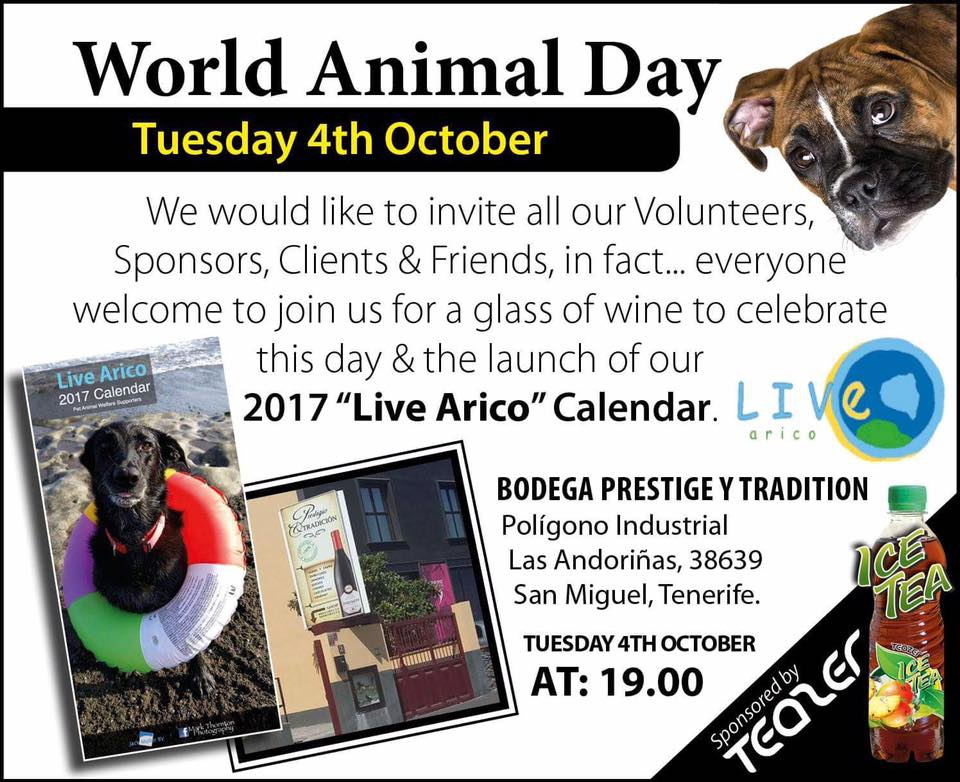 Live Arico Charity Calendar Launch