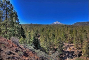 Tenerife pine forests and Mount Teide
