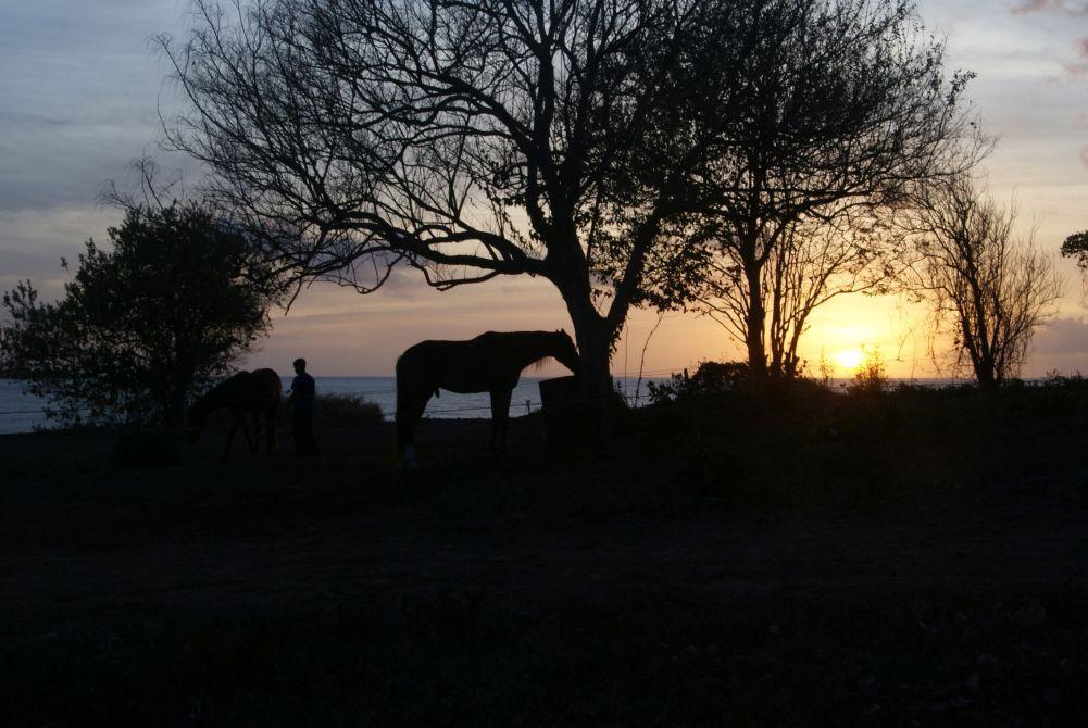 Buccoo Cliff at sunset