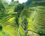 Rice Terrace Fields