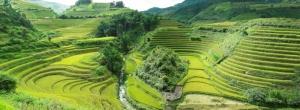 Rice Field in Sapa