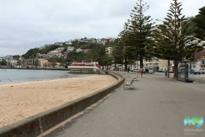 View from Oriental Bay
