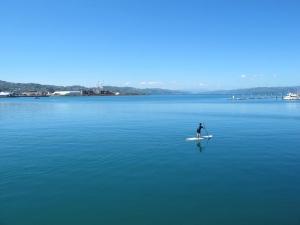 Wellington Harbour Paddle Surfer