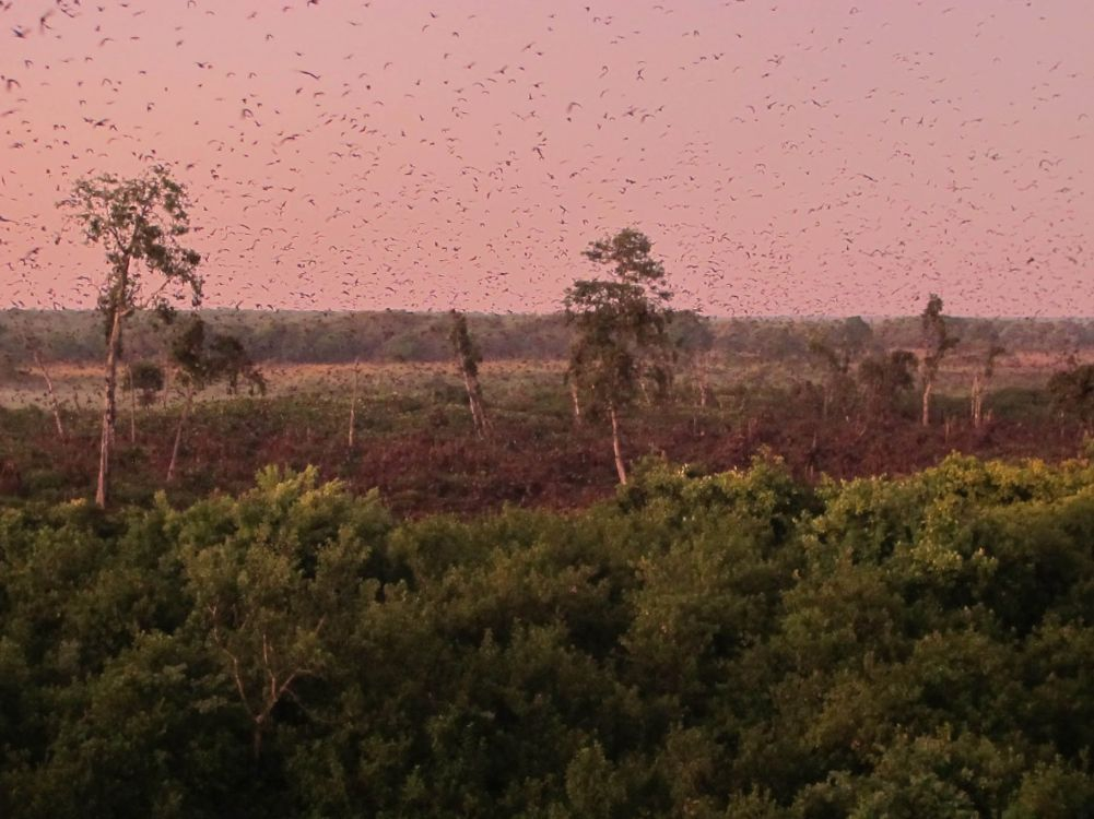 10 million bats roost in that brown area!