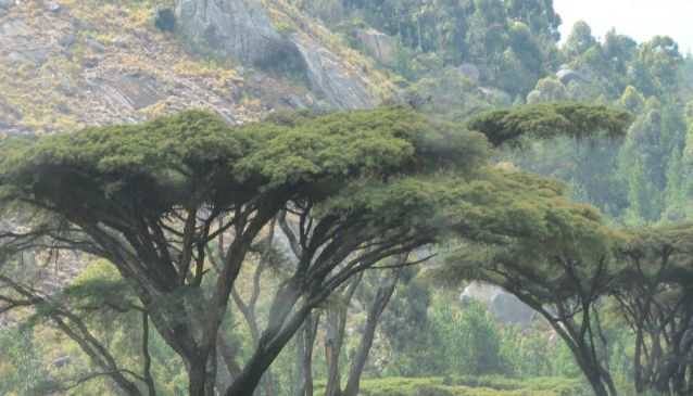 Escape To The Eastern Highlands