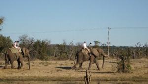 Elephant Back - Afro Honey Guide
