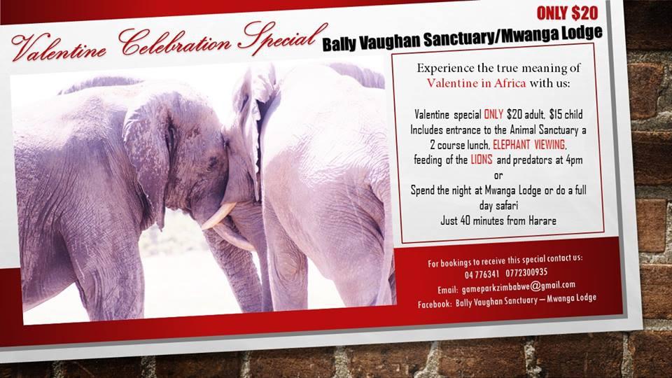 Bally Vaughn Sanctuary/ Mwanga Lodge Valentine Special