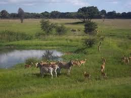 The Mukuvisi Woodlands