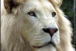 Lion Park And Snake World