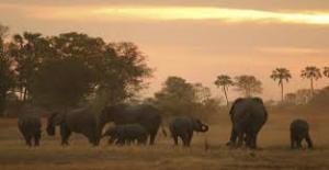 November Fly-In Safari Special