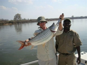 17 Pound Tiger Fish Caught Zambezi River