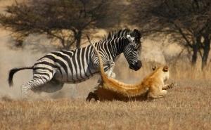 Antelope Park Gweru