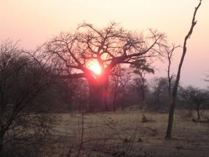Chishakwe - Lowveld
